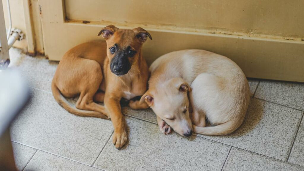Hunde liegen auf Fliesenboden