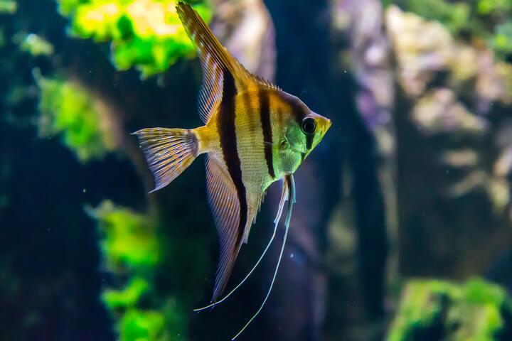 Aquarium mit kleinem Fisch